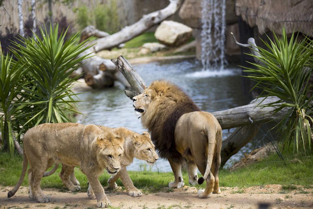 Activit s sur blois et sa r gion la perluette chambres for Chambre zoo de beauval